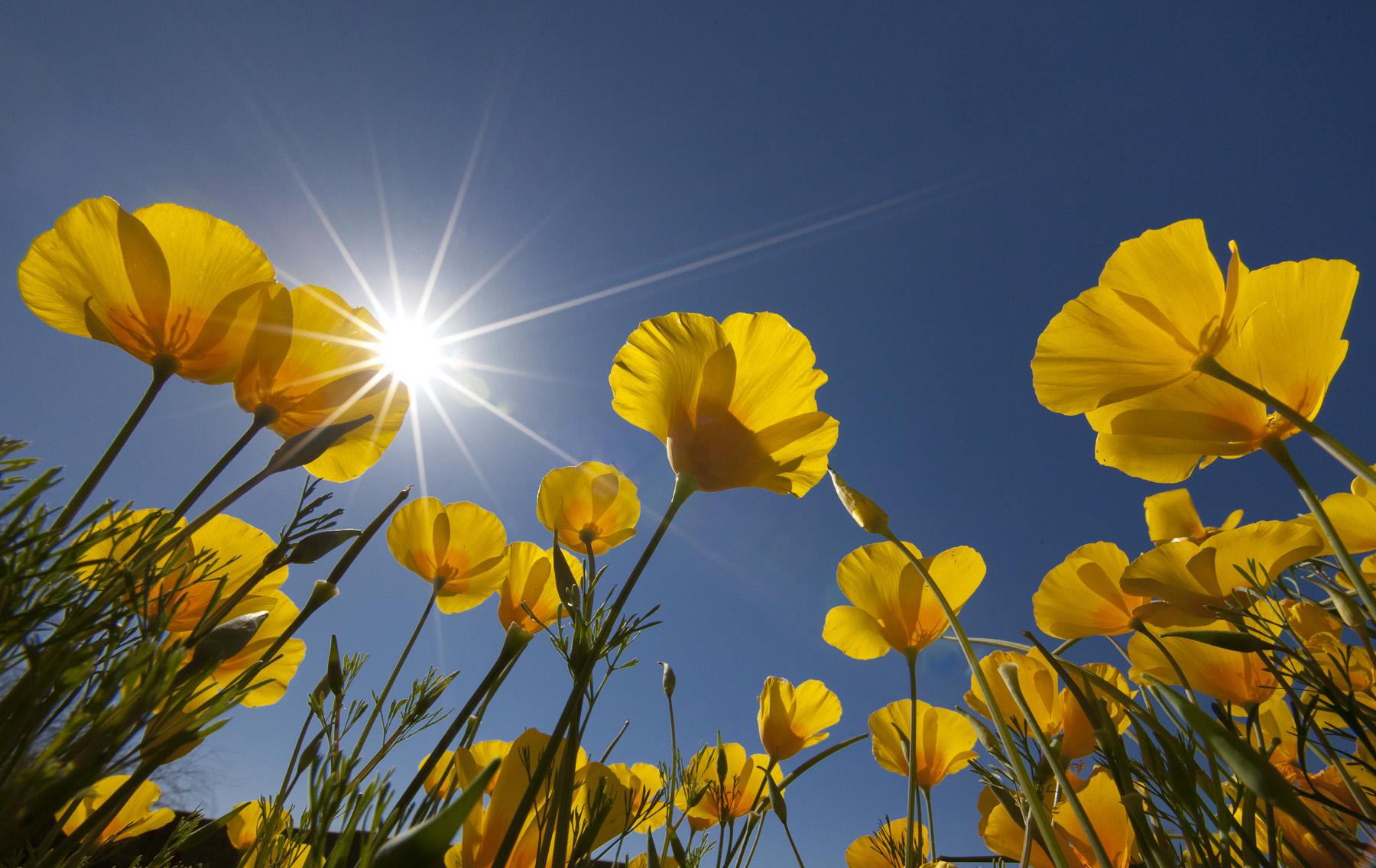 Wildflowers-Macro-19-2.Mar-13-2012-3