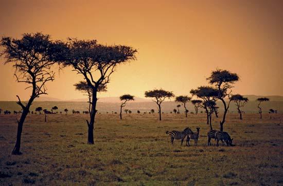 savanna2
